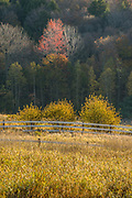 Farmland and forest, morning light, October, October, Cheshire County, New Hampshire, USA