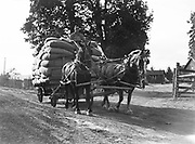 9969-2045. Wagon load of hops coming in to the dryer. September 12, 1935. Riverside Hop farm, owned by A.J. Ray and Son, Inc., Newberg, Oregon.