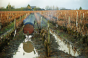 Vineyard winter pruned with a wheel barrow from an oil barrel to burn twigs. Le haut Lieu, Domaine Huet, vouvray, Loire, France