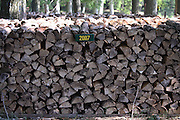 Firewood stacked for winter in the remote Northwoods of northern Wisconsin.