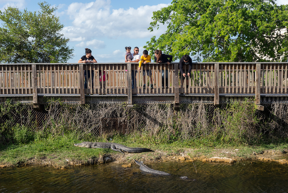 Tourists watch the alligators at the Big Cypress Oasis Visitors Center along Hwy 41 near Ochopee, FL