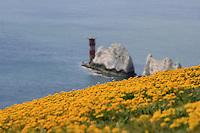 Yellow Needles
