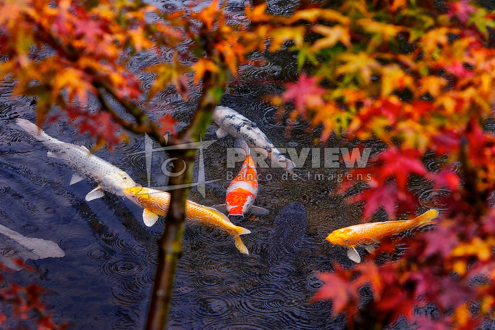 Carpas coloridas no Kitano Odori Gardens, Japão. FOTO: Jefferson Bernardes/Preview.com