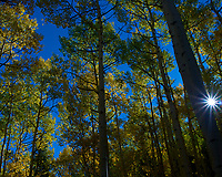 Autumn Aspen Forest with a Sunburt. Image taken with a Leica X2 camera (ISO 100, 24 mm, f/16, 1/125 sec).