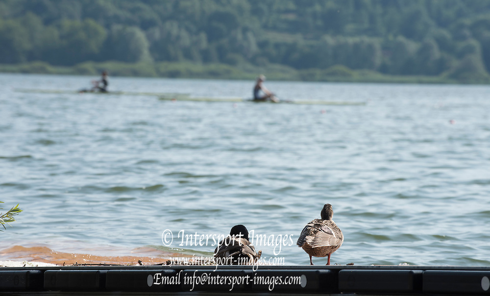 Varese. ITALY.   Local lake side residents, out spotting the talent on display. 2015 FISA World Cup II Venue Lake Varese. Wednesday  17/06/2015 [Mandatory Credit: Peter Spurrier/Intersport images]
