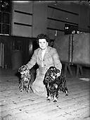 1958 – 26/04 Cocker Spaniel Club of Ireland's 25th Show