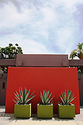Interior facade of an entry of a home, with red wall and three agava plants in green planters. <br /> Photo shooting took place in a modern, minimalistically decorated beachfront home in exotic small town of Los Barriles, Baja California Sur, Mexico. <br /> Home decoration is comprised of different color selections, each used with careful combination of details and accompanying furniture, plants and other decorative elements. Prevailing colors are white, red and striking turquoise blue.<br /> Here we are showing photographs from 2 parts of this home; guest bedroom and inner patio, where magnificent red wall with agavas welcomes you upon arrival. And if you are lucky enough to get an invite to stay in the house over night, you will enjoy a beautiful bedroom, with minimal decoration, but very attractive, relaxed and Mexican, but in a contemporary way.