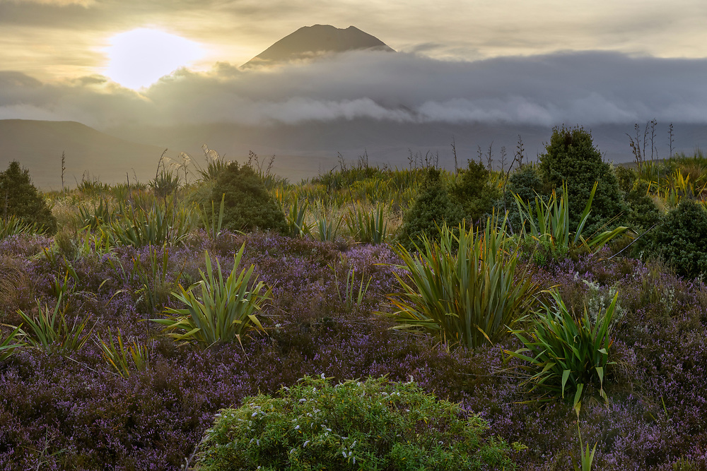 Oceania, New Zealand, Aotearoa, North Island, Tongariro National Park