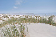 The flowing sand dunes of Farewell Spit, the north-eastern tip of New Zealands South Island. The photographer and its equipment is prone to sand-blasting when taking such photos, as is the case in the rest of the western side of Farewell Spit!
