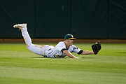 Oakland Athletics right fielder Mark Canha (20) dives to make a catch against the Miami Marlins at Oakland Coliseum in Oakland, Calif., on May 23, 2017. (Stan Olszewski/Special to S.F. Examiner)