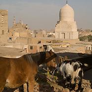 Cairo The horses of historic Cairo EG145A