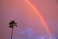 Rainbow and palm tree at sunset, Lafayette, Contra Costa County, CALIFORNIA