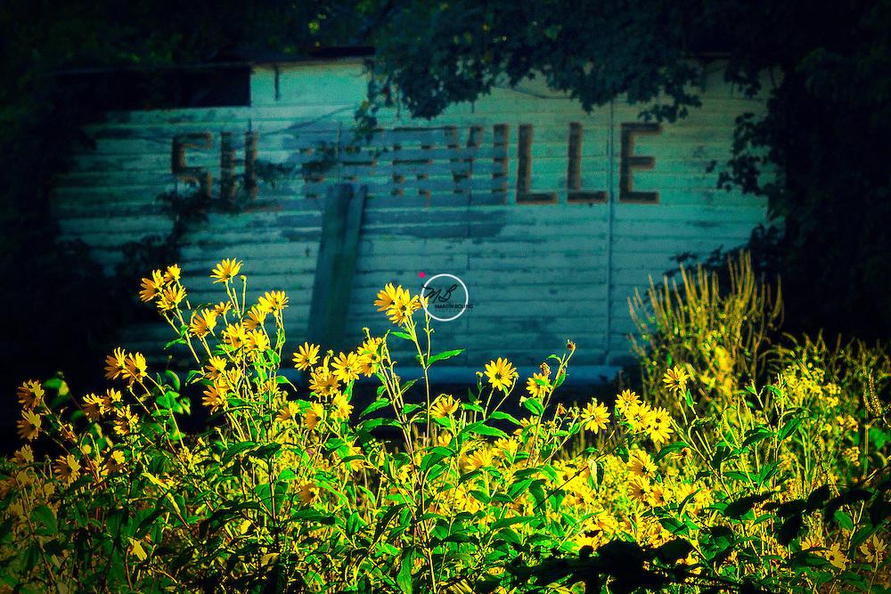 Silverville General Store n flowers
