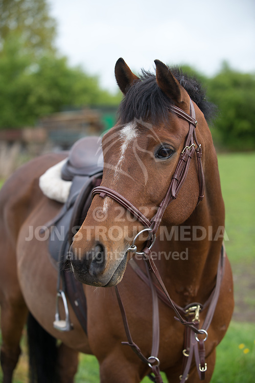 HORSE - LAURA SHEPPERD - Allenscroft, Worcestershire, United Kingdom - 15 May 2013