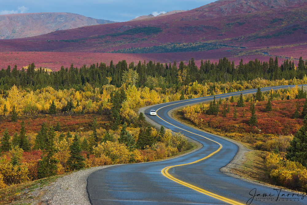 A winding road in an Alaskan autumn landscape, Denali National Park, Alaska