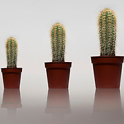 Getting larger, Reflection, Prickly, Three objects, no people