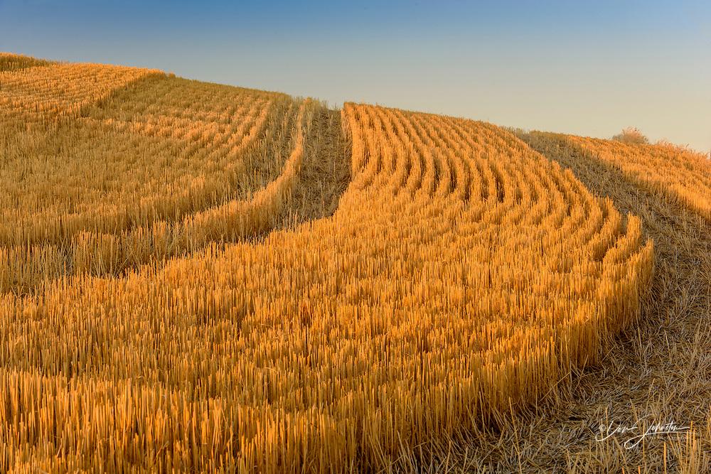 Farmland in late summer, Hwy 272 between Colfax and Palouse, Washington, USA