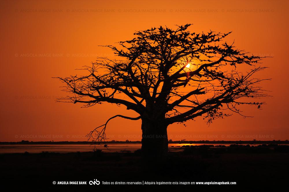 Silueta de imbondeiro ao pôr do sol. Salinas do Mussulo. Província de Luanda. Angola.
