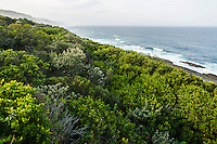 Coastal Forest Canopy, Garden Route National Park, Eastern Cape, South Africa