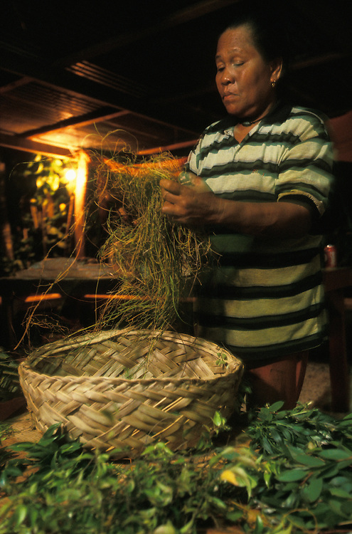 A medicine woman sorts the herbs for a steam bath that she will administer to a young mother who has given birth for the first time. Palau, Micronesia, in February, 2005. The bath is part of the ngasech, the traditional ceremony that all women in Palau undergo after having given birth for the first time.