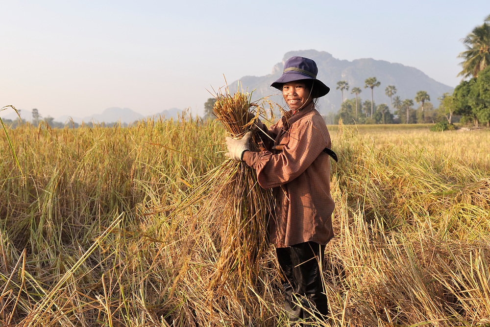 A woman works in a rice field in Khnach, a village in the Kampot region of Cambodia.