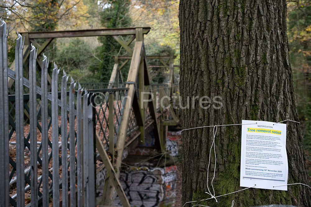 The notification of a tree removal notice is attached to the trunk of an oak tree in Sydenham Hill Woods, the scene of a protest against the proposed felling of two 100+ year-old oak trees, threatened by Southwark Council because of their proximity to 'Pissarro's' footbridge whose renovation has been deemed necessary by the local authority, on 11th November 2020, in London, England. The Nunhead to Crystal Palace (High Level) railway once passed through the Wood and Impressionist artist  Camille Pissarro (1830–1903) famously painted a railway landscape from the bridge in the 1870s. Sydenham Hill Wood forms part of the largest remaining tract of the old Great North Wood, a vast area of worked coppices and wooded commons that once stretched across south London. The habitat is home to more than 200 species of trees and plants as well as rare fungi, insects, birds and woodland mammals.
