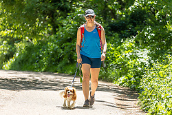 Licensed to London News Pictures. 01/06/2021. Dorking, UK. On the hottest day of the year so far, Amy McCulloch 35 from south London enjoys a hike around Box hill, Surrey this morning with a rather hot looking King Charles Spaniel called Moose. The Met Office have forecast very warm weather for the South East and London this week with temperatures predicted to hit up to 26c today and over 27c tomorrow. Photo credit: Alex Lentati/LNP