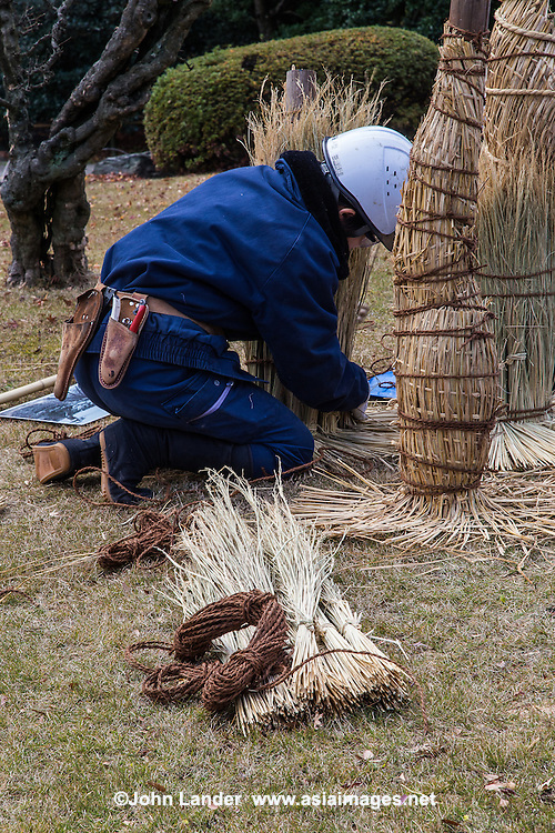 Japanese komo-maki or komomaki is wrapping the trunk of a tree with a rice straw mat.  This is often seen in Japanese gardens in early winter to protect the trees. This method is mistakenly regarded as protecting pine trees from the cold of winter, but is in fact protection from  insects that infect pine trees. When spring comes, this mat is removed from the trunk to be burnt along with the insects that have burrowed inside the straw.