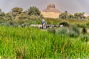 Shepherd on donkeyback tending to his flock of goats and sheep in Dahshur with the black Pyramid in the background