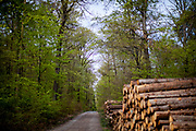 The Taunus forest close to Oberursel. The Taunus is a mountain range in Hessen, Germany, located north of Frankfurt.