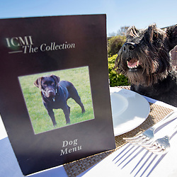 Hamish, the Commonwealth Scottie Dog, checks out the Chez Roux dog menu at Greywalls Hotel