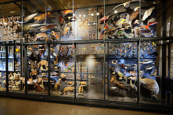 15.03.2016, Museum fuer Naturkunde, Berlin, GER, Naturkundemuseum Berlin, im Bild Vitrinen mit Exponaten // Exhibits in the Natural History Museum Museum fuer Naturkunde in Berlin, Germany on 2016/03/15. EXPA Pictures © 2016, PhotoCredit: EXPA/ Eibner-Pressefoto/ Schulz<br /> <br /> *****ATTENTION - OUT of GER*****