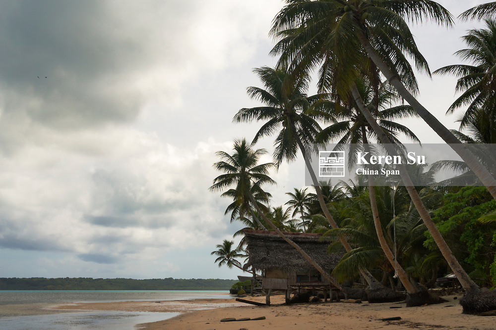 Palm trees on the beach, Yap Island, Federated States of Micronesia