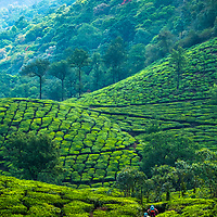 Karen Eller and Ricky Westphal riding the tea plantations of Kerala, India.