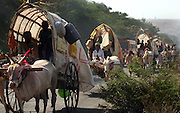 """Yellamma worshippers travel by bullock cart to the Yellamma Temple in Saundatti, India, on the first day of the Yellamma Jatre (festival).  The Yellamma Jatre is an annual gathering of half a million Yellamma pilgrims who converge on the temple to worship the deity, Yellamma.  Amongst the rituals traditionally performed to appease Yellamma, young girls are dedicated as Devadasi or """"temple servants"""".  These young girls are married to the deity and must spend their lives serving the deity which includes catering to the sexual needs of men in the community.  They may not marry a mortal and often end up working in brothels in India's urban centers. While the dedication ceremonies used to be performed in public at the Jatre and included parading the young girls naked through the crowds or covered in """"neem"""" leaves, due to the Devadasi Prohibition Act, they are now performed in secret."""