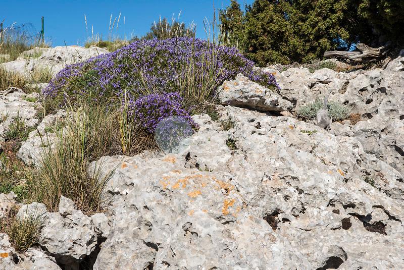 Parque Natural de los Calares del Mundo y de la Sima. Sierra del Segura. Albacete ©ANTONIO REAL HURTADO / PILAR REVILLA