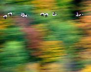 Landscapes & Foliage