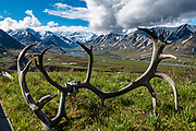 Views of the Alaska Range through moose antlers on the turf roof of Eielson Visitor Center, in Denali National Park, Alaska, USA.