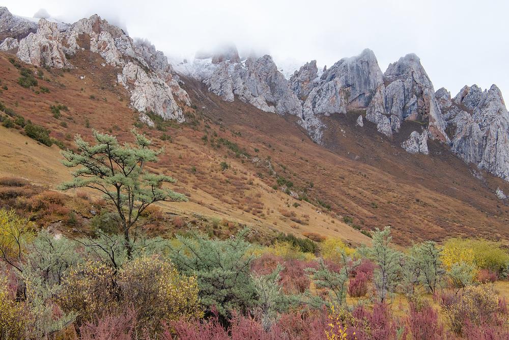"Angsai nature reserve, ""Valley of the Cats"", Sanjiangyuan National Nature Reserve, Tibetan Plateau, Qinghai, China"