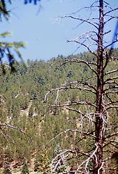 Colorado Rockies - 2000
