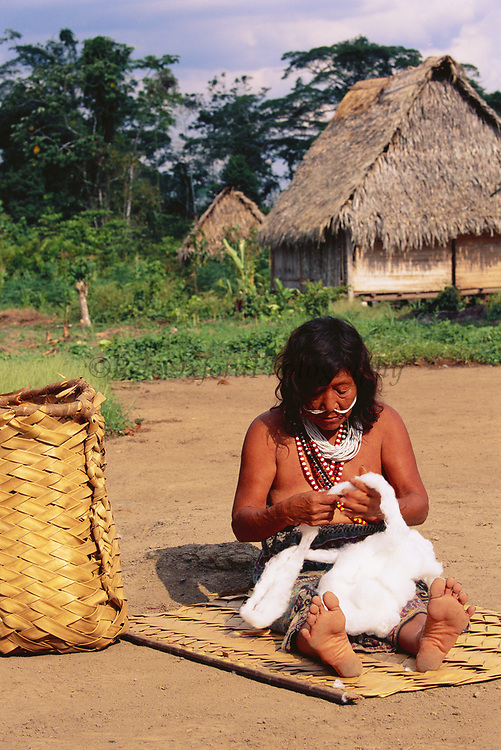 Yaminahua Indian working with home grown Cotton<br />Boca Mishagua River<br />Amazon Rain Forest, PERU.  South America<br />'Only contacted in 1988'