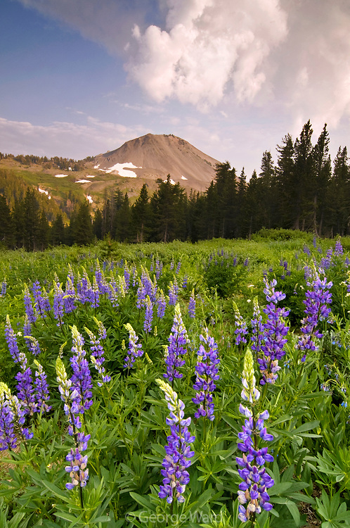Lupine and Clouds near Ebbetts Pass, Stanislaus National Forest, California