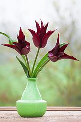 Tulip 'Sarah Raven' in a green vase
