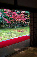 Japanese Maple and Autumn Colors at Koto-In Garden, Daitokuji Temple, Kyoto.  Koto-in was established in 1601 by Tadaoki Hosokawa. He was a famous warrior under Toyotomi Hideyoshi, studied Zen under the Daitoku-ji abbot, Seigan, and was a distinguished disciple of tea master, Sen no Rikyu. Koto-in is home to two famous tea houses, Shoko-ken and Horai.