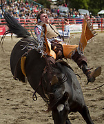 Arnold Lim/News staff<br /> Matt Lait hangs on during the Bareback Bronc at the Luxton Rodeo at the Luxton Fairgrounds. VICTORIA, B.C. May 23, 2010.