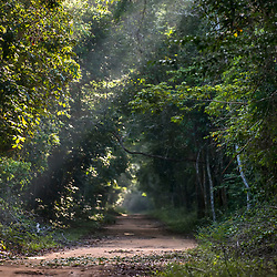 """""""Rodovia Estadual ES-356 na Rebio de Sooretama (Paisagem) fotografado em Linhares, Espírito Santo -  Sudeste do Brasil. Bioma Mata Atlântica. Registro feito em 2013.<br /> <br /> <br /> <br /> ENGLISH: State Highway ES-356 in Sooretama Rebio  photographed in Linhares, Espírito Santo - Southeast of Brazil. Atlantic Forest Biome. Picture made in 2013."""""""