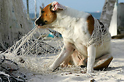 Mexican street dog tangled in fisherman's net trying to chew his way out.