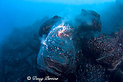 pillow lava erupts from an underwater lava tube at ocean entry of Kilauea Volcano Hawaii Island ( the Big Island ) Hawaii U.S.A. ( Central Pacific Ocean )