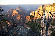 North Rim of the Grand Canyon, AZ