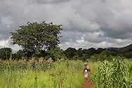 Farmer Gertruda Domayo walks past cornfields in Nakahegwa, Tanzania. Gertruda is a soy bean farmer participating in CRS' Soya ni Pesa project (funded by USDA) that links smallholder soy bean farmers with markets. Sara A. Fajardo/Catholic Relief Services